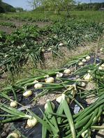 野菜は有機 自家栽培&地元の農家さん。