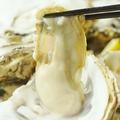 料理メニュー写真本日の特選生牡蠣 (1個)