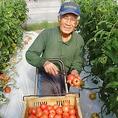 高知県 リグリ農園のトマト