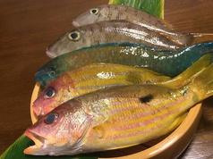 料理メニュー写真本日のお魚