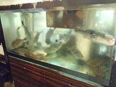 新鮮活魚を見ながら地酒を一杯( ^o^)