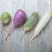 東北牧場のこだわり野菜(4色の大根)