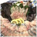 料理メニュー写真長崎産 石鯛のお造り(季節物になります)