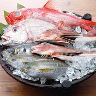 【鮮度の追求】水揚げされた魚を当日中に店舗配送!