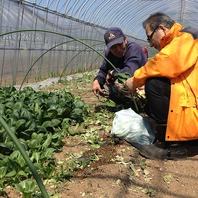 契約農家の野菜達