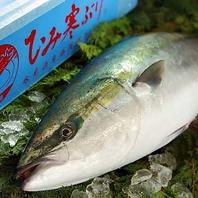 採れたて鮮魚が絶品◎脂がのった鰤は絶品!