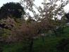 和食茶房 風の彩のおすすめポイント2