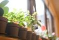 緑も大切に。お店にはいろんな種類の植物が