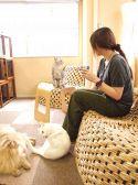 Cat Cafe ねころびのおすすめ料理2