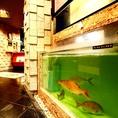 店内水槽から取り出すその日仕入れた鮮魚は捌いた後も動きます!