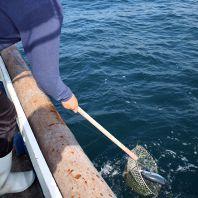 漁協完全管理された鮮魚をお届け