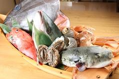 寿し割烹 魚市の写真