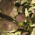 料理メニュー写真自社農園の有機野菜サラダ(ある時だけ)