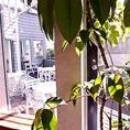 癒される観葉植物♪