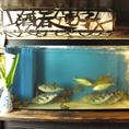 毎日新鮮な魚をご提供いたします!!お好みの日本酒と一緒にお楽しみください