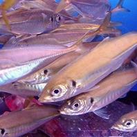 いけすの新鮮な魚介を提供