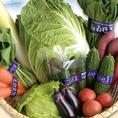 【神奈川 湘南野菜】地元神奈川県の大事に育てられた野菜です!