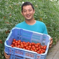 生産者井出さんのトマト【井出トマト】!井戸水を利用して栽培しているのですが、その水の成分がトマトに適しているため大玉に育つそうです。それでも水っぽくならず濃厚で完熟の甘いトマトが出来るのが井出さんの技術!!