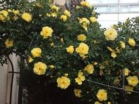バラが美しい!デッキでペットも休めます。