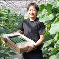 平塚市 城島園芸 吉川さんの【きゅうり】!芳川さんは神奈川県のきゅうりの主産地『平塚』の温室きゅうり専門40年以上の農家。神奈川伝統野菜【幻のきゅうり 相模半白節成(さがみはんじろふしなり)】の復活に向けた栽培・歴史の研究に取り組んでおられます。