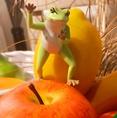 【フルーツ/野菜担当★やす:フルーツ/野菜の目利きのプロフェッショナル!!】『フルーツと野菜の事なら何でも聞いてや~~(^_^)/~♪』