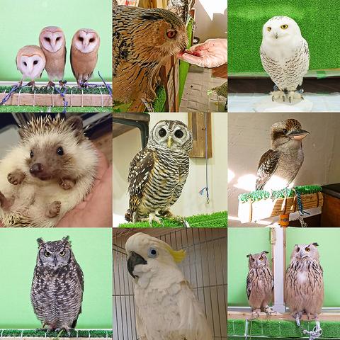 フクロウやハリネズミなど、普段ふれあうことが出来ない動物との癒し体験できるお店☆