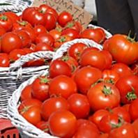 厳選されたトマト
