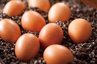 「つまんでご卵」を使用♪