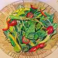 料理メニュー写真産直野菜のフレッシュサラダ