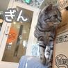 猫カフェ ルアナのおすすめポイント1