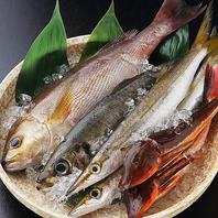 築地直送鮮魚!!彩り豊かな厳選素材