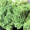 料理メニュー写真菜の花