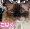 猫カフェ ルアナのおすすめポイント2