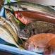 宮崎の魚を、生産者の想いを届けたい気持ち
