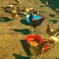 千葉の大地で育った卵も使っております♪