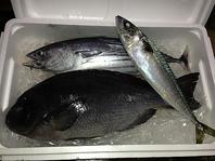 漁師仲間から届く新鮮な魚
