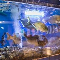 店内には生簀!お席で選ぶ旬の鮮魚をお楽しみください!