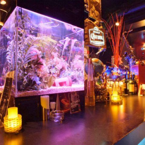 中央の水槽前のお席は人気席☆ 熱帯魚通も唸る透明度100%! 素敵な空間を演出します♪