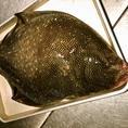 【自慢の魚】松川カレイは、北海道から。1日寝かせてしっとりと食べればヒラメよりも旨い・・・?!~恵比寿 貸切 宴会 隠れ家 海鮮居酒屋 じょう はなれ 日本酒 焼き鳥~