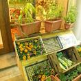 店頭で新鮮野菜、卵、苗など販売!