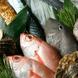 毎日仕入れる鮮魚