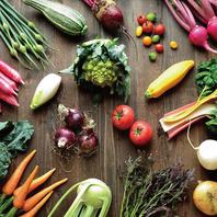 彩り野菜のサラダバー〈食べ放題〉