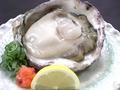 料理メニュー写真夏限定 岩牡蠣