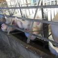 【豚】長野の良質な豚