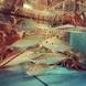 【贅沢な海の幸】生け簀と浜焼きが一押し!