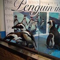 可愛いペンギンがお出迎え