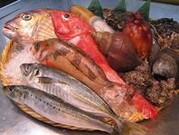 新鮮な魚たち