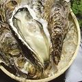 料理メニュー写真本日の牡蠣料理