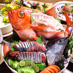 高知産 朝獲れ鮮魚の刺身盛り合わせ
