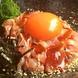 ◆自慢の地鶏料理「京紅地鶏」「大山鶏」など